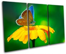 Butterfly Flowers Animals - 13-1157(00B)-TR32-LO